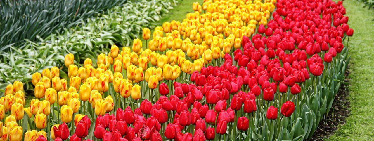 La Hollande en fleurs
